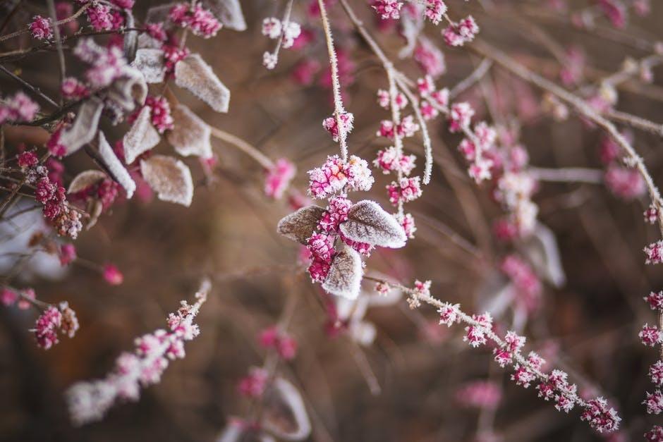 winter1_pexels-photo.jpg